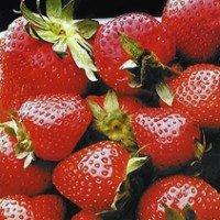 Разсад за ягоди