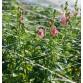 Хоризонтална мрежа за подкрепа на растения - Отвор р-р 10х10см.