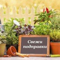 Семена за подправки