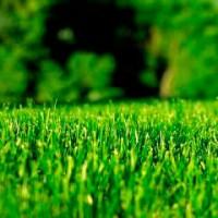 Тревни смески и семена за райграс