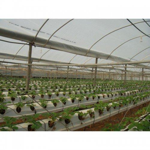 Израелски многослоен  полиетилен за оранжерии - 150 mic